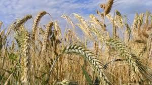 Landbouwdag - Visit Hardenberg