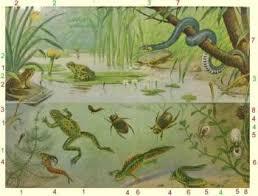 Onderzoek Waterbeestjes Uit De Reest - Visit Hardenberg