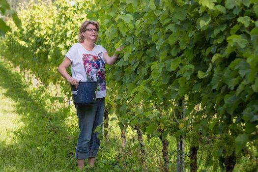 Eigenaar bij wijngaard Lutten - Visit Hardenberg