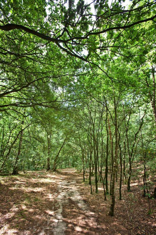 Het Collendoorner Bos