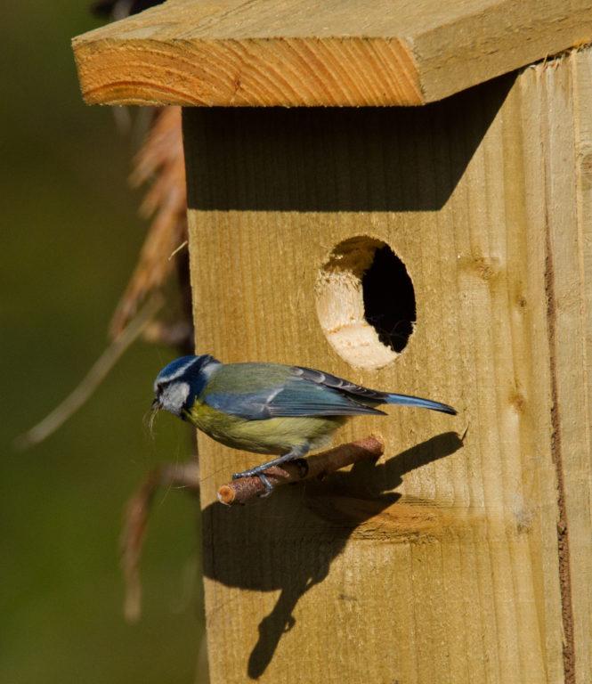 Wandeling 'Vroege vogels' - Visit Hardenberg
