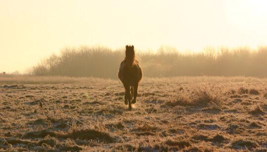 paard vloeivelden - Visit Hardenberg