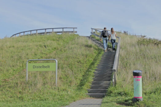 Distelbelt - Visit Hardenberg