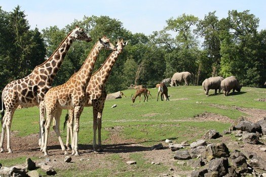 Wildlands Adventure Zoo Emmen - Visit Hardenberg