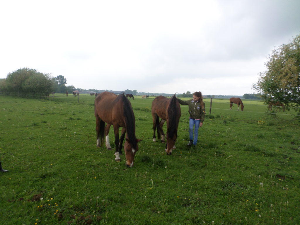 Je Kan Weer Paarden Knuffelen En Tevens Rommelmarkt - Visit Hardenberg